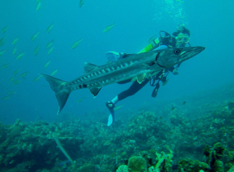 Alexandra und der Barracuda