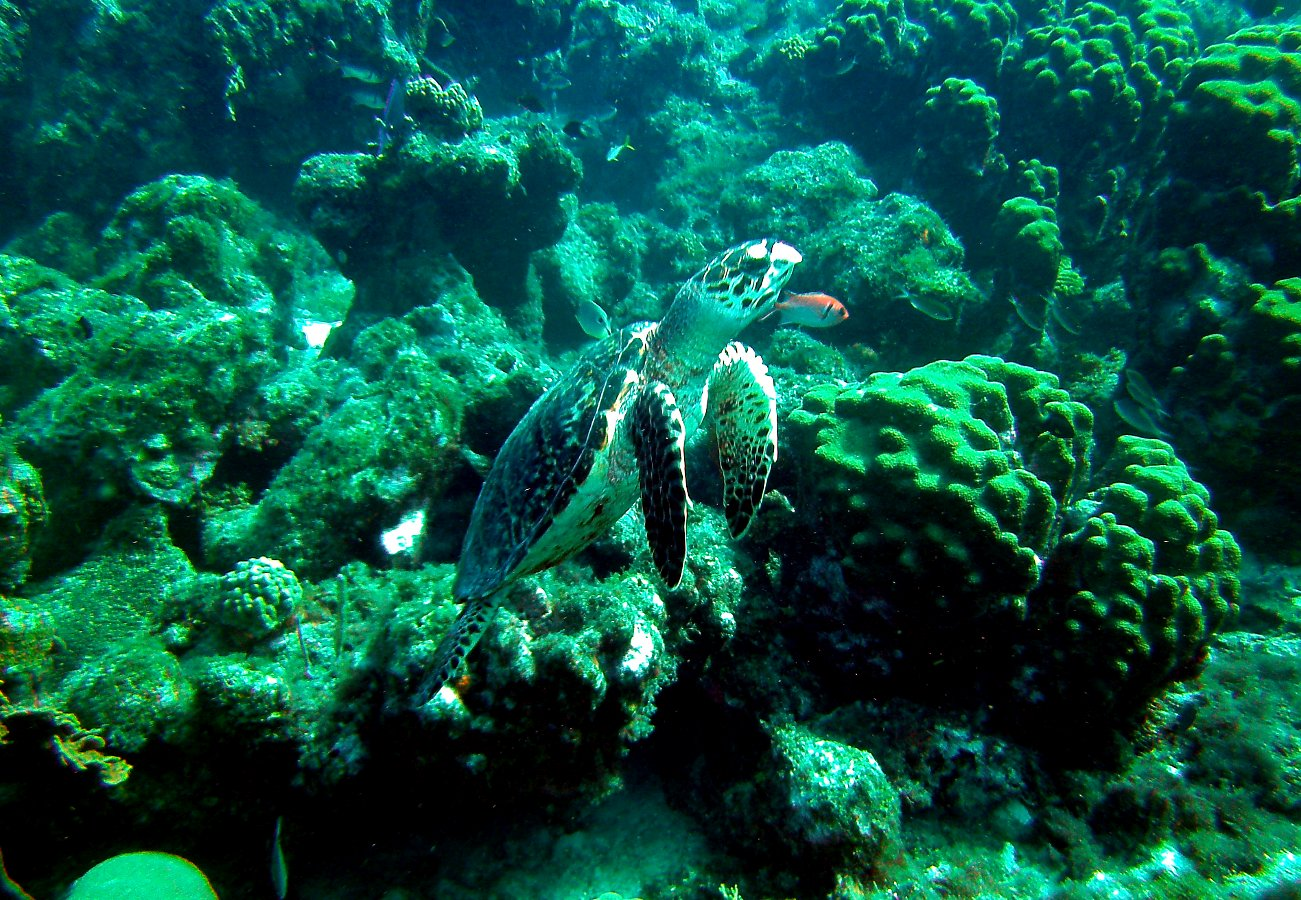 dreibeinige Schildkröte
